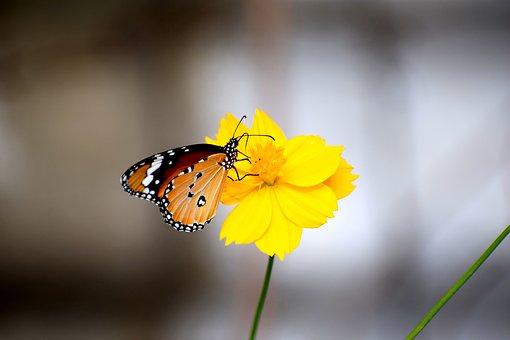 Butterfly, Flowers, Nature, Summer, Green, Pattern