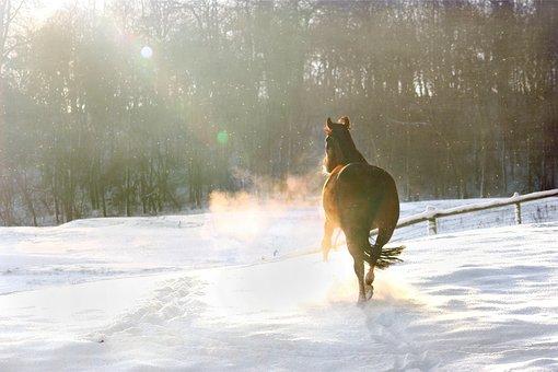 Winter, Snow, Christmas, December, Horse, Running