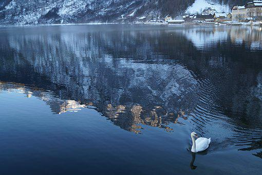 Austria, Hallstatt, Duck, Lake, Nature, Riverside, Snow