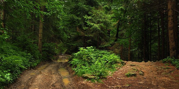 Way, Beskids, Hot, The Path, Trail, Mountains, Forest