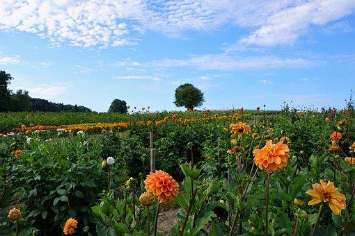 Meadow, Field, Zollikon, Zurich, Canton, Switzerland