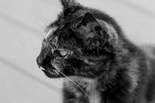 Cat, Pet, Kitten, Animal, Futrzak, A Young Kitten