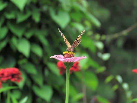 Butterfly, Flower Garden, Tropical Butterfly