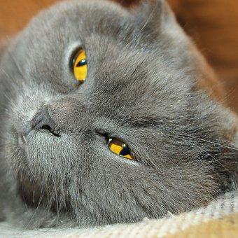 Cat, View, Cats, Pet, Fluffy Cat, Grey Cat, Snout