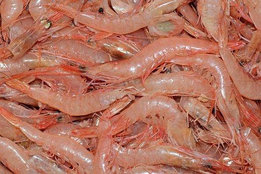 Crabs, Frisch, Fish Market, Sea Animals, Shellfish