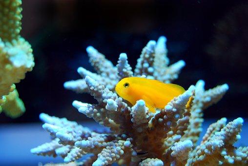 Fish, Reef, Coral, Underwater, Sea, Coral Reef, Ocean