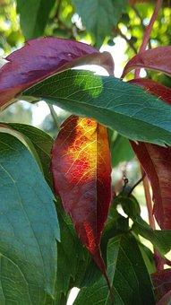 Foliage, Nature, Summer, August, Plants