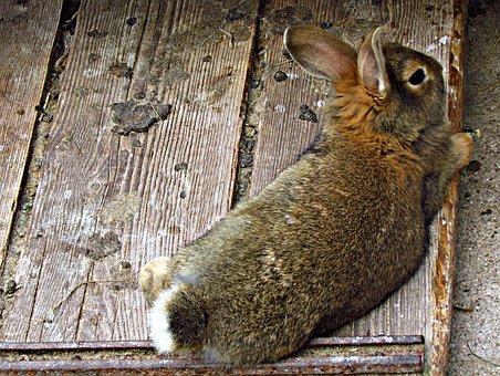 Bunny, Rabbit, Fur, Animal, Cuddly, Fluffy, Friendly