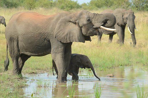 Elephant Mother And Baby, Elephants, Baby, Mother