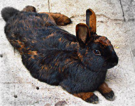 Rabbit, Hare, Animal, Bunny, Fur, Lovely Small, Cuddly