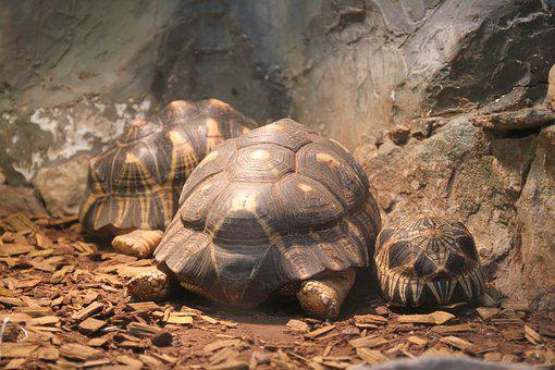 Tortoise, Turtle, Zoo, Animals, Undersea World, Shell