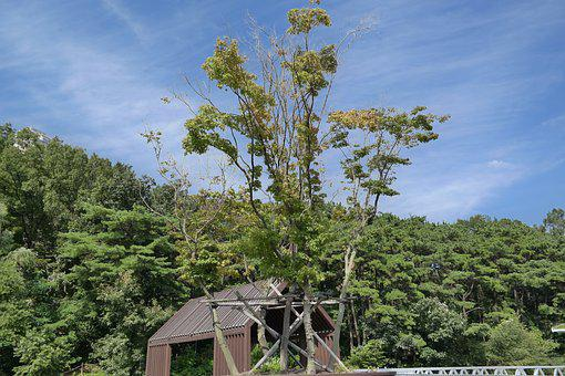 Forest, Wood, Garden, Bench, Blue Sky, Sky, Nature