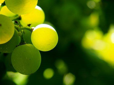 Vineyard, Vines, Green, Autumn, Winegrowing, Winemaker