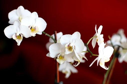 Flowers, Flower, Orchid, Vegetable, Delicate Flower