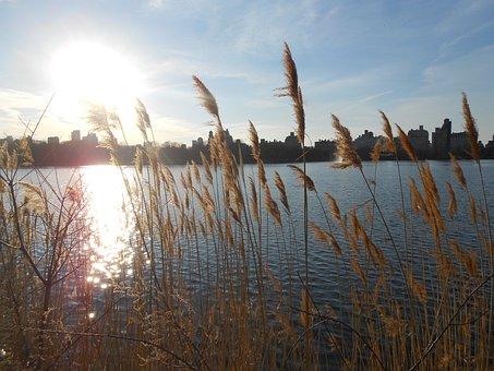 New York, Central Park, Manhattan, United States, Usa