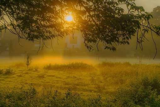 Sunrise, Fog, Tree, Sun, Morning Hour, Landscape