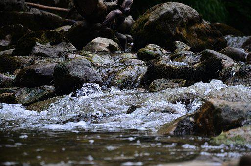 Water, Bach, Nature, Natural Water, Waters, Flow, River