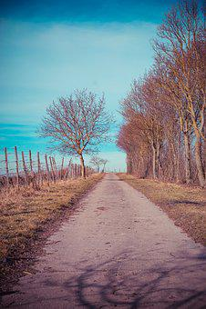 Lane, Vineyard, Landscape, Walk, Winegrowing, Wine