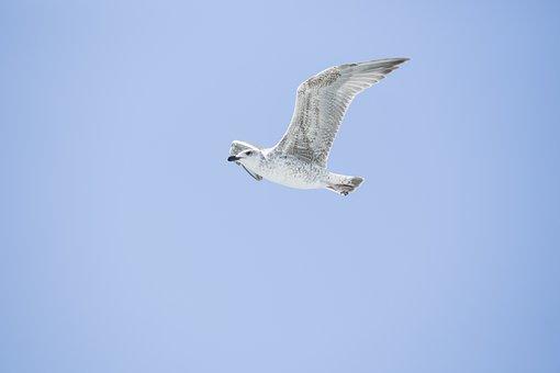 Bird, Seagull, Environmental, Birds, Nature, Animal