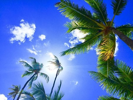 Hawaii, Aloha, Palmtree, Bluesky, Relax, Resort Hawaii