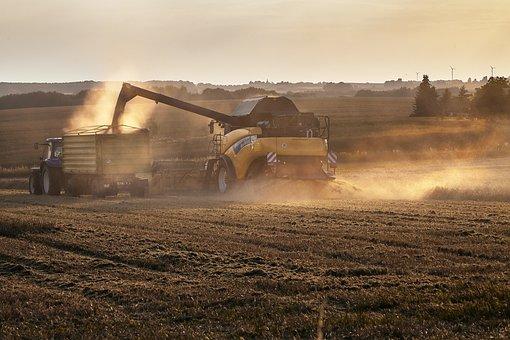 Harvest, Oilseed Rape, Combine Harvester, Evening