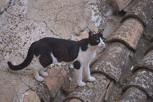 Cat On The Roof, Cat, Roof, Feline, Animal