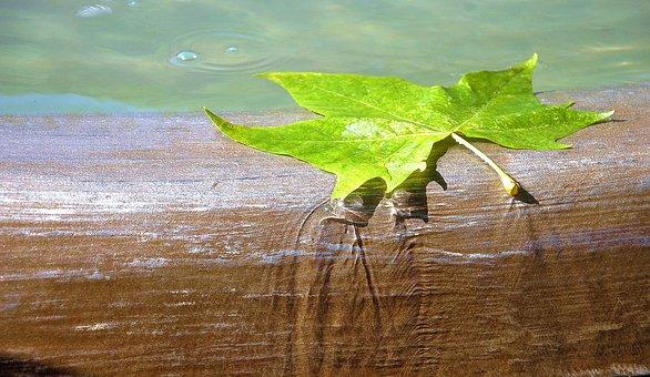 Water, Brunne, Leaf, Flow, Well Water, Water Feature