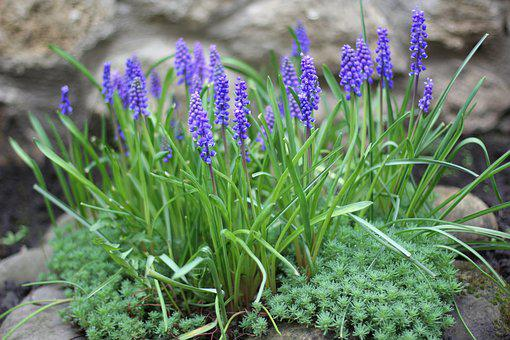 Flowers, Garden, Vegetable Garden, Spring, Handsomely