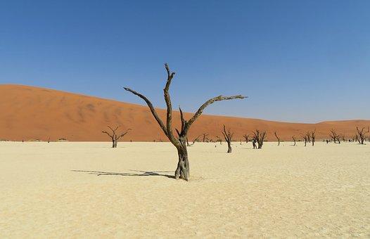 Dead, Vlei, Namibia, Desert, Salt, Tree, Death, Dunes