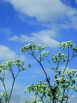 Plants, Nature, Flutes Herb