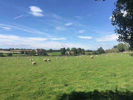 The Flock, Ranch, Meadow, Grass, Peace, Yang, Sky