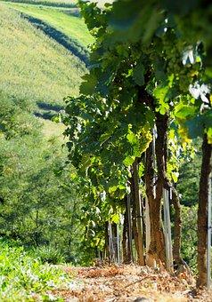 Vineyard, Vines, Line, Wine, Grapevine, Rebstock, Green