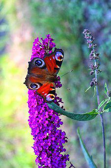 Butterfly, Kid Stories, Butterfly Bush, Summer
