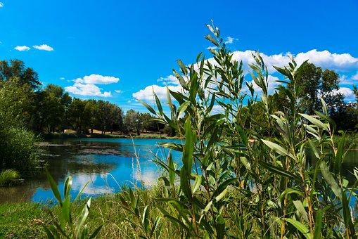 Willow, Basketry, Lake, Vallabrègues, Oseraie, Gard