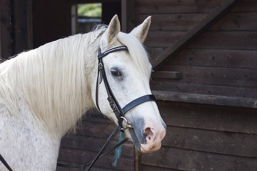 Horse, Equine, Equestrian, Animal, Nature, Mammal, Farm