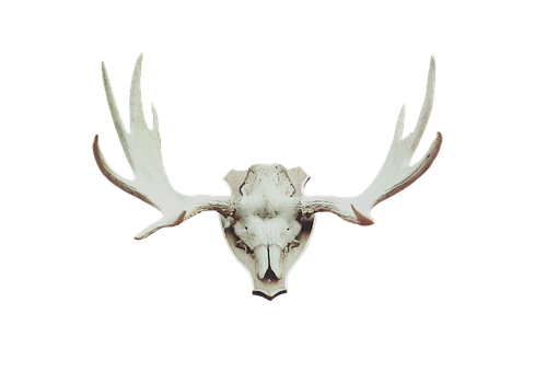 Antler, Moose Antler, Deer Antler, Trophy, Hunting
