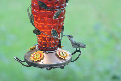 Bird, Hummingbird, Wildlife, Nature, Animal, Small