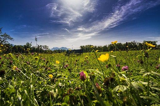 Panorama, Grass, Bank, Bench, Tranquility Base, Break