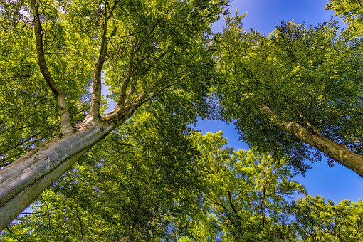 Crown, Trees, Forest, Nature, Sky, Green, Treetop