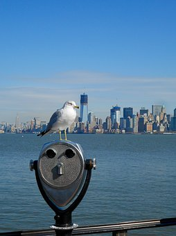 Seagull, Manhattan, New York, Water, Usa