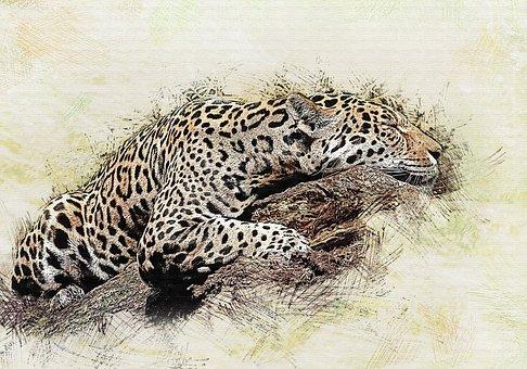 Jaguar, Cat, Predator, Wild Cat, Beast Of Prey, Animal