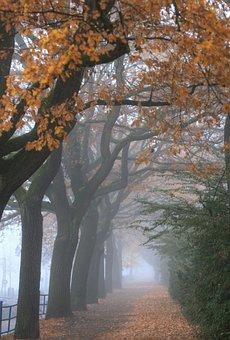 Autumn, Avenue, Baumallee, Yellow, Autumn Leaves