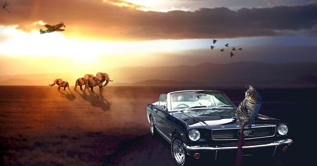 Cat, Mustang, Car, Animal, Wildlife, Pet, Outline