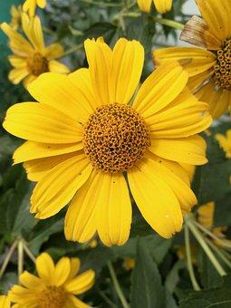 Flowers, Yellow Flowers, Summer, Macro, Flower Bed