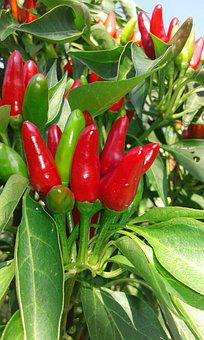 Pepper, Red, Green, Food, Healthy, Vegetable, Fresh