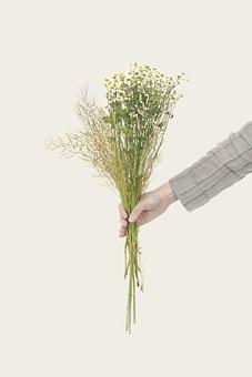 Bouquet, Flowers, Nature, Holding