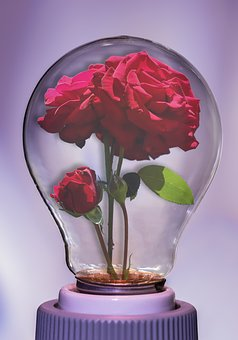 Bulb, Rose, Light, Flower, Floral, Lamp, Plant