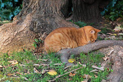 Autumn, September 1, Sorrow, Cat, Red-headed Cat, Sad