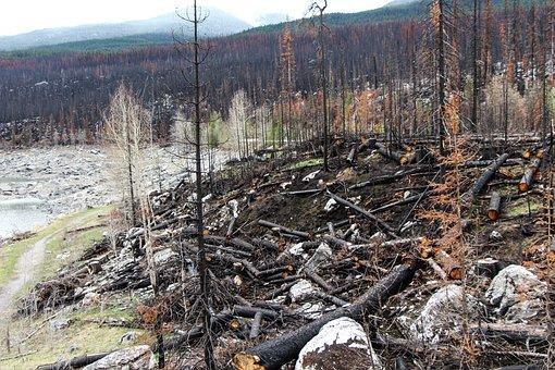 Forest Fire, Spirit Lake, Jasper, Alberta, Canada