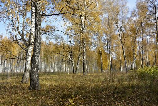 Forest, Autumn Forest, Autumn, Nature, In The Fall Of